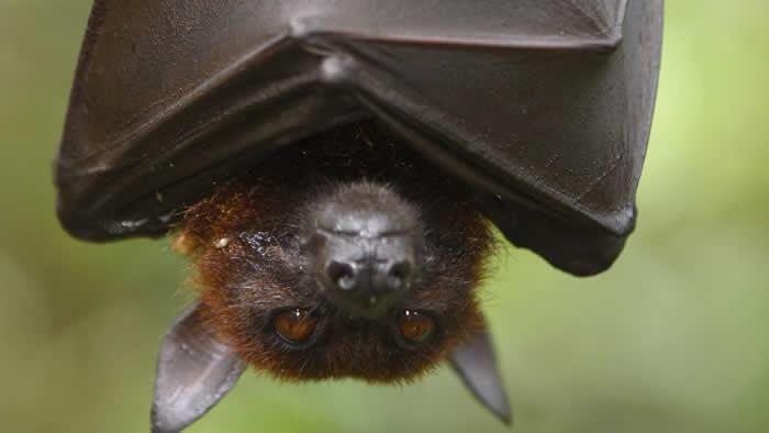 Bat spiritual meaning