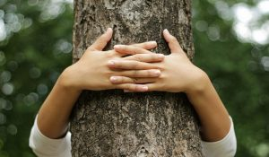 Hugging Trees is Good for Our Health: This is Why