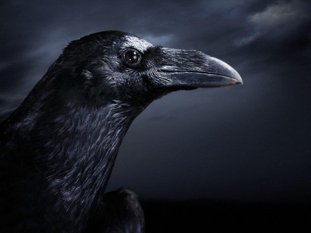 Raven spiritual meaning