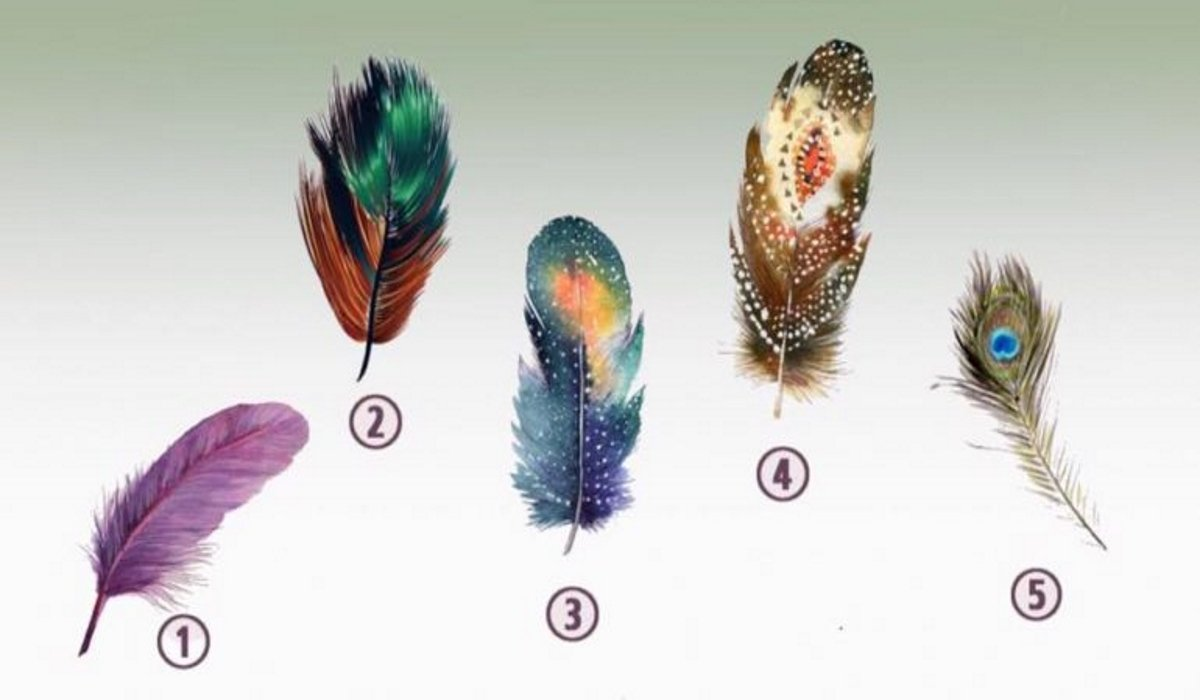 Choose The Feather That Attracts You The Most And Discover Your Inner Power