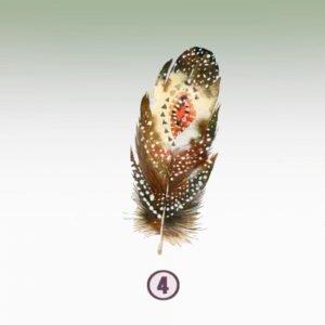Feather 4- GENEROSITY