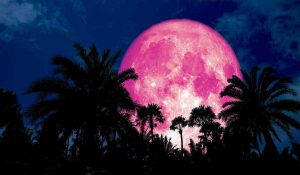 The Full Pink Moon in Libra on April 19th will Bring Renewal to Your Life