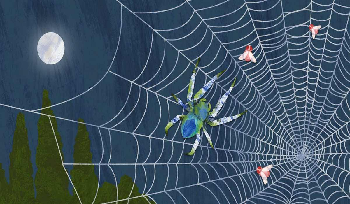 The Hidden Spiritual Meaning Of Spiders! Do You See Them Often?