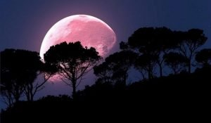 The Strawberry Full Moon on June 17 will Bring Major Energy Change