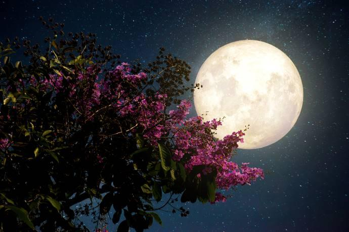 The moon of flowers