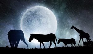 Dreaming of Animals: Here Is the Meaning of Dreaming One of these Animals