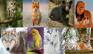 What Your Birth Animal Reveals about Your True Personality