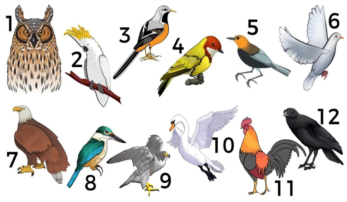 What does Your Birth Month Avian Reveal about You
