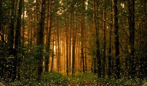 The Mental and Spiritual Benefits of Spending time in the Forests