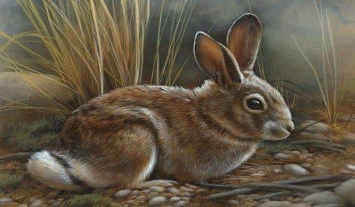 Friday: Rabbit