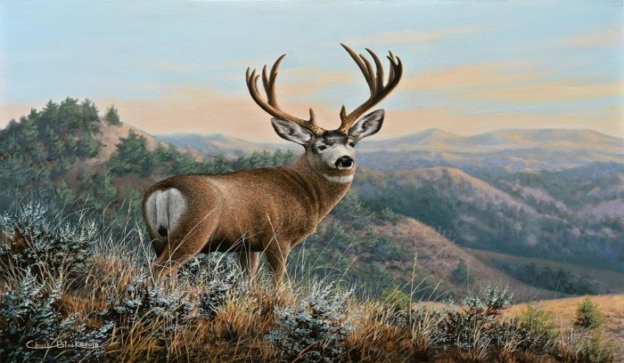 Wednesday: Deer