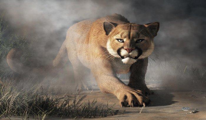 Tuesday: Cougar